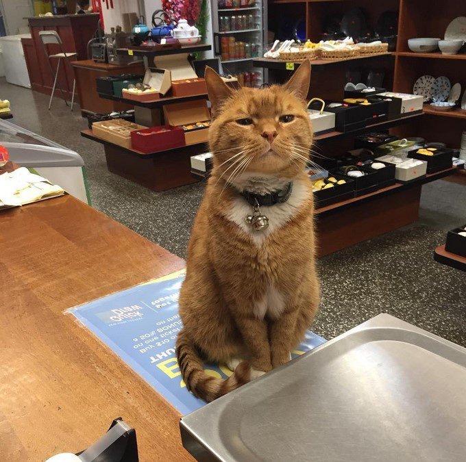 Bobo, le roi du magasin