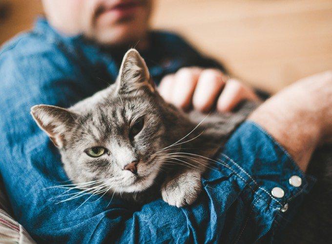 Chat énérvé dans les bras de son propriétaire