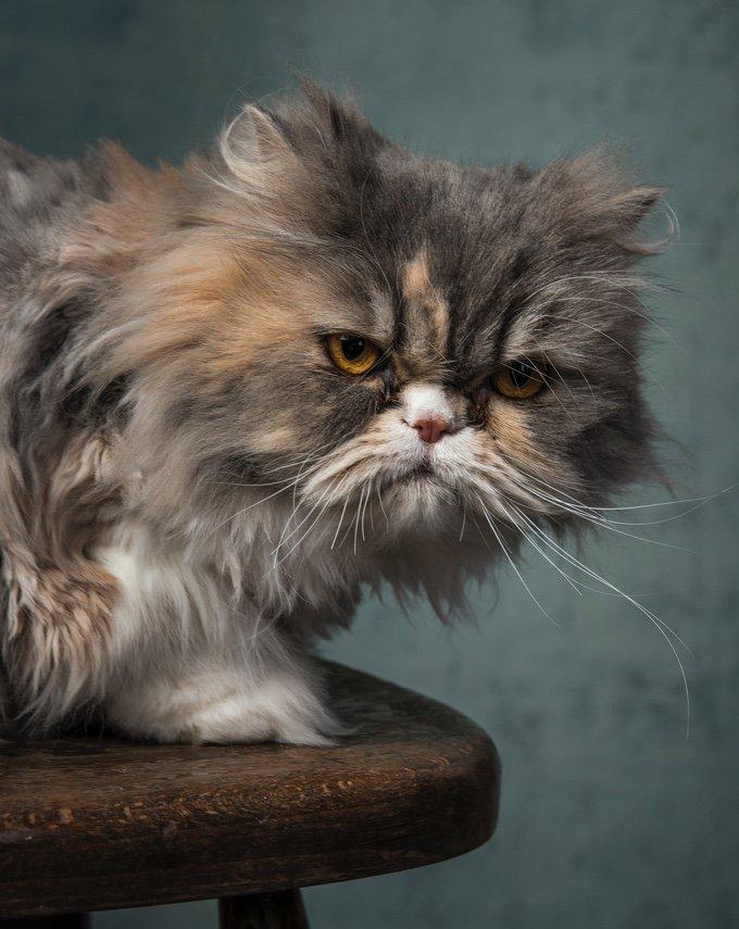 Pourquoi mon chat est-il si grincheux