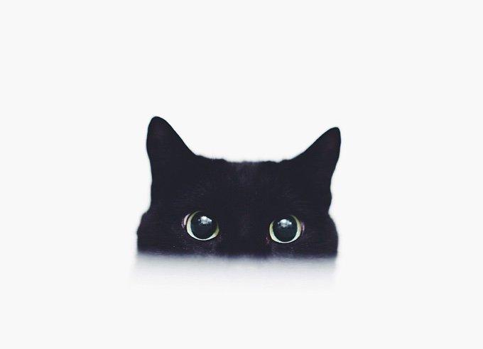 chat-noir-et-blanc-10-05-2016