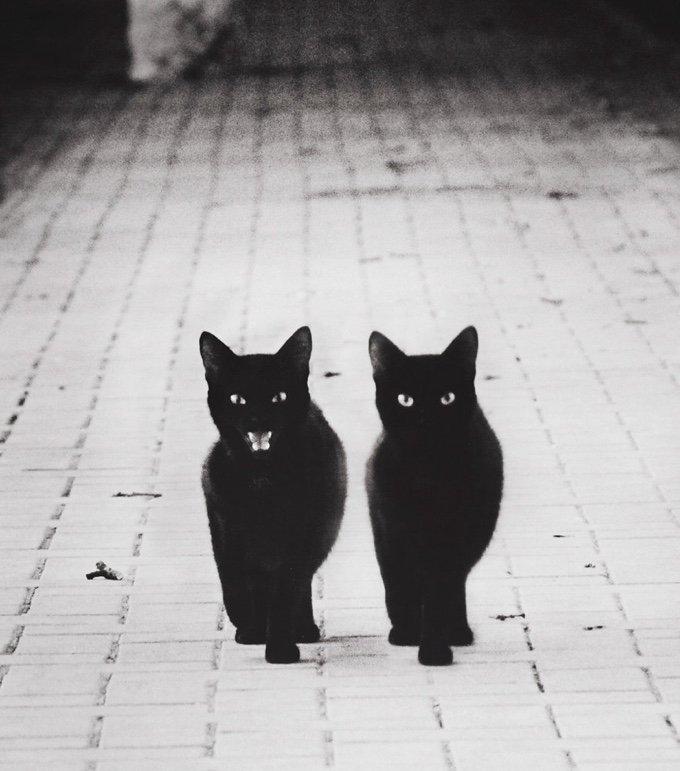 chat-noir-et-blanc-11-05-2016