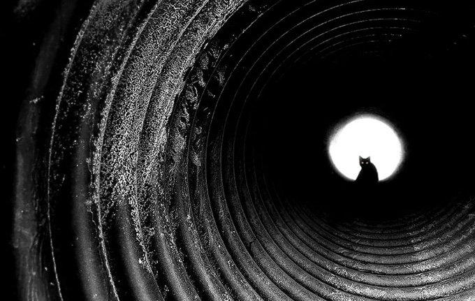 chat-noir-et-blanc-12-05-2016