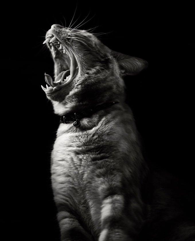 chat-noir-et-blanc-13-05-2016