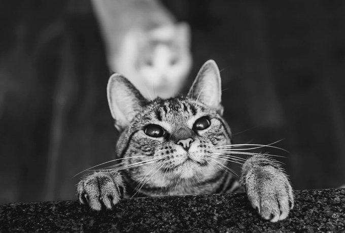noir & blanc chatte www vidéo XXXII com