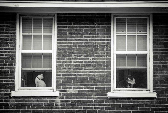 chat-noir-et-blanc-16-05-2016