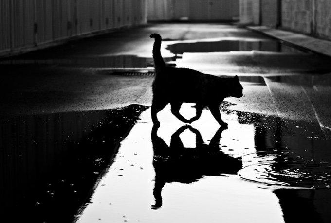 chat-noir-et-blanc-17-05-2016