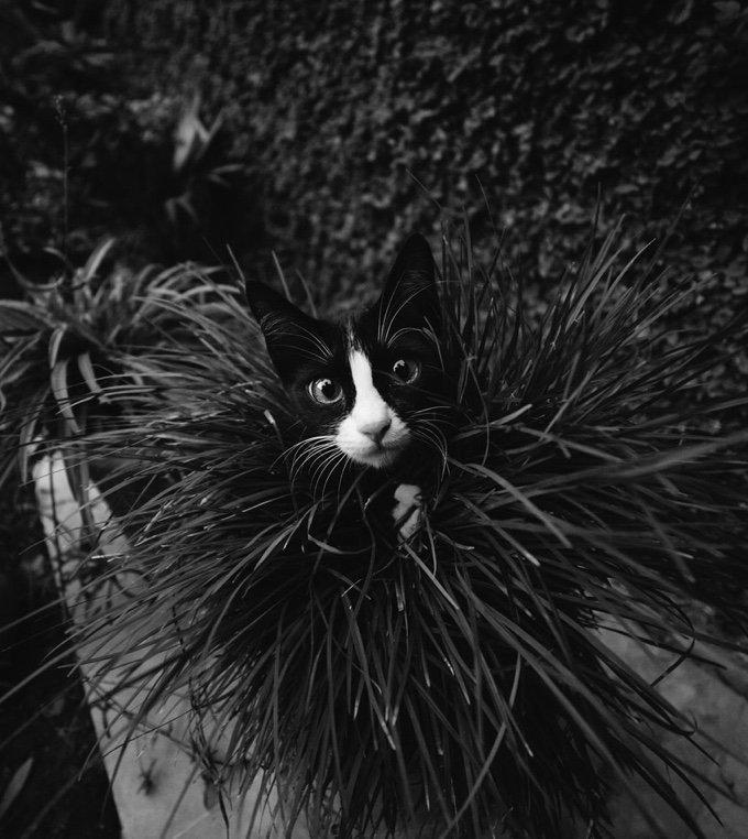 chat-noir-et-blanc-18-05-2016