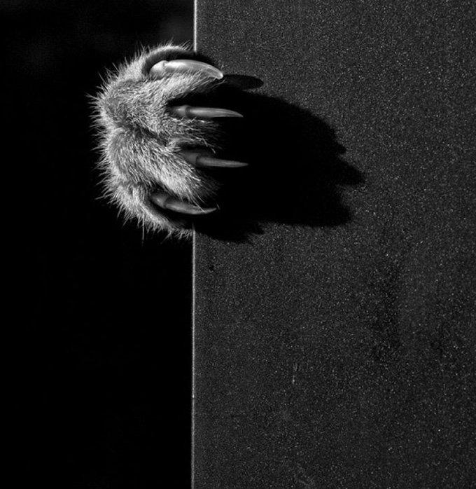 chat-noir-et-blanc-19-05-2016