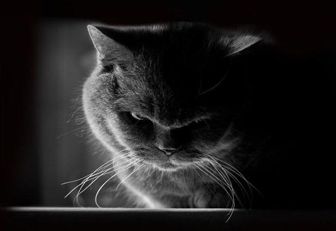 chat-noir-et-blanc-2-05-2016