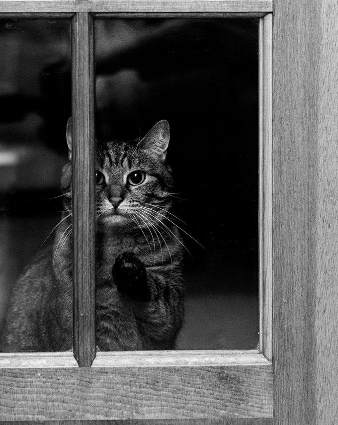 chat-noir-et-blanc-20-05-2016