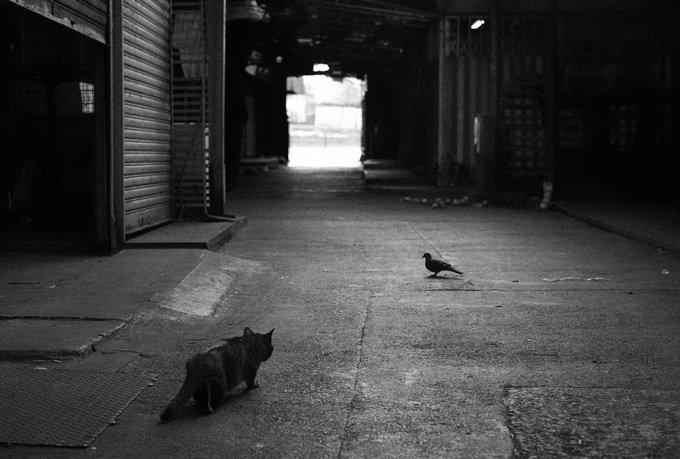 chat-noir-et-blanc-21-05-2016