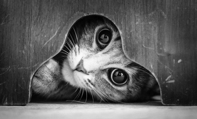 chat-noir-et-blanc-22-05-2016