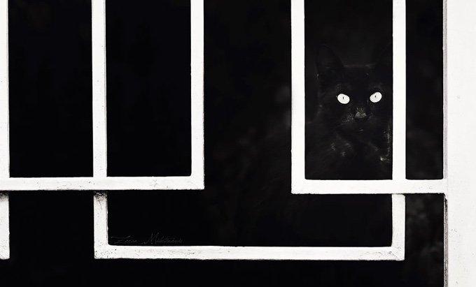 chat-noir-et-blanc-23-05-2016