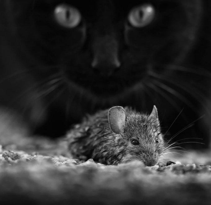 chat-noir-et-blanc-25-05-2016