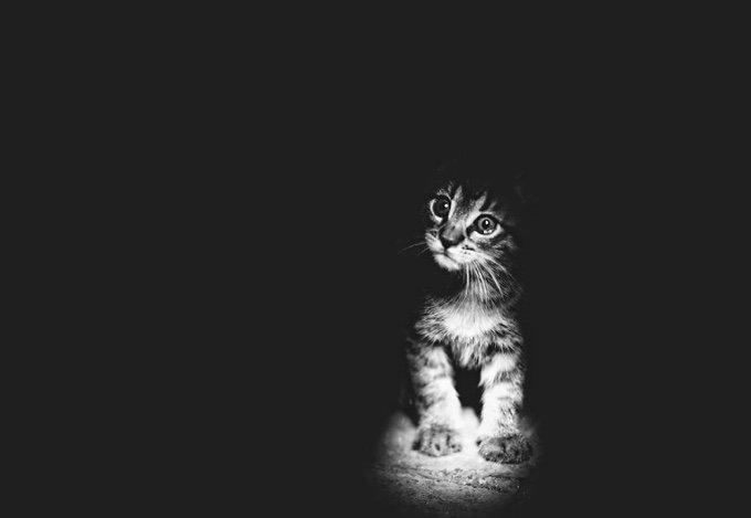 chat-noir-et-blanc-3-05-2016