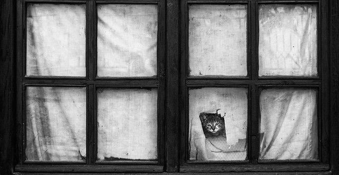 chat-noir-et-blanc-4-05-2016