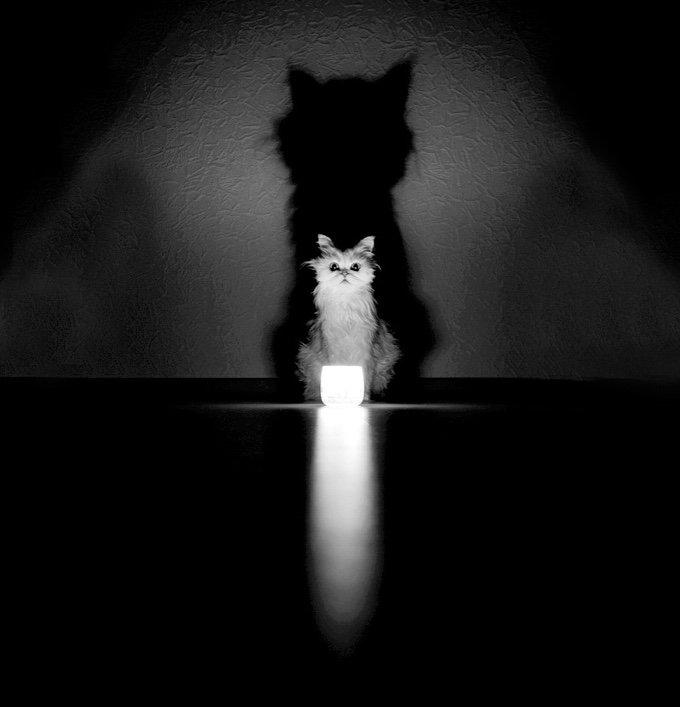 chat-noir-et-blanc-5-05-2016