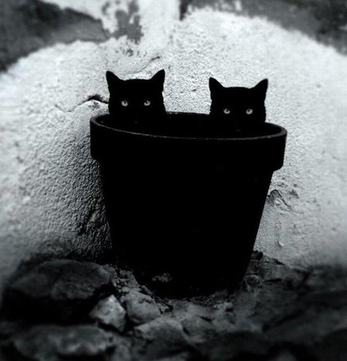 chat-noir-et-blanc-6-05-2016