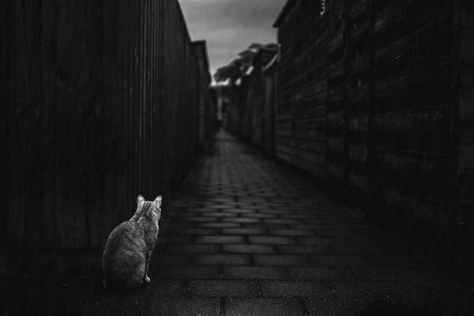 chat-noir-et-blanc-7-05-2016