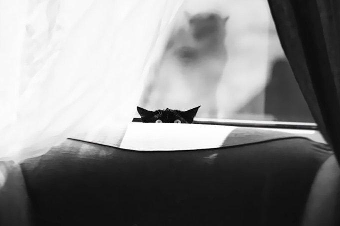 chat-noir-et-blanc-8-05-2016