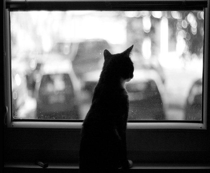 chat-noir-et-blanc-9-05-2016
