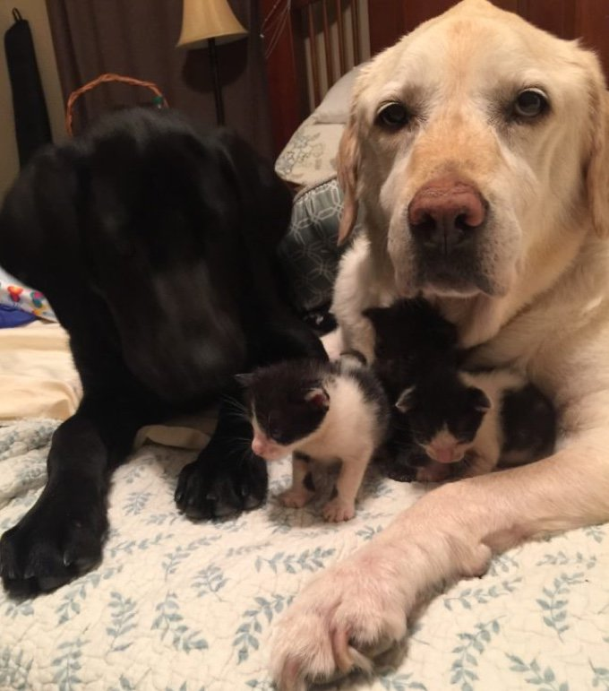 chaton-famille-d-accueil-05-2016