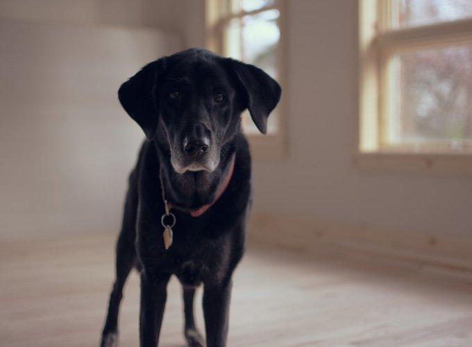 chien-appartement-05-2016