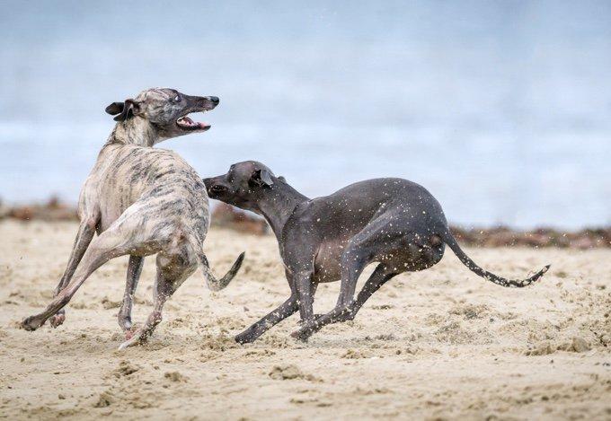 chien-course-05-2016