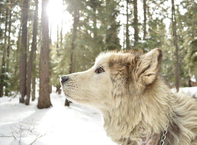 chien-neige-05-2016