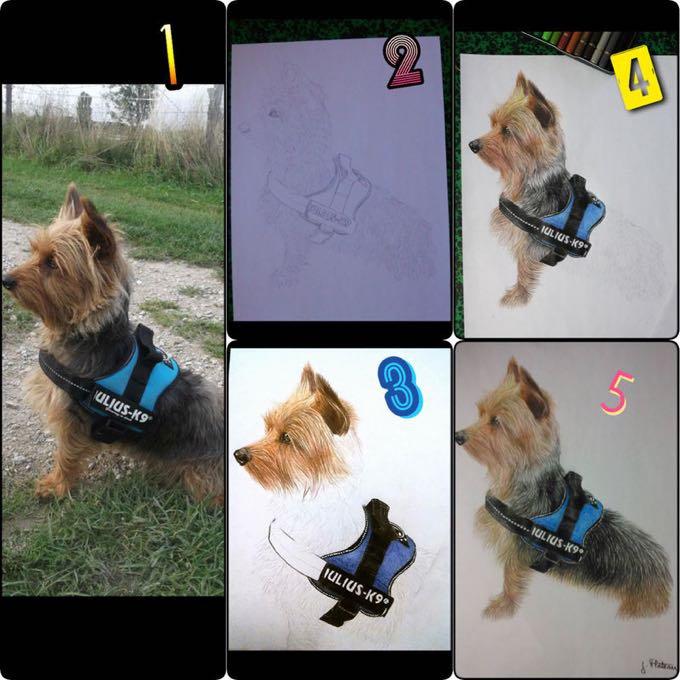 dessin chien yorkshire