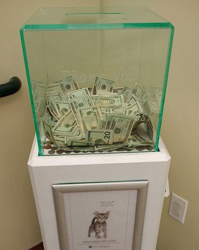 Un inconnu fait un don de 8000 Dollars à un refuge