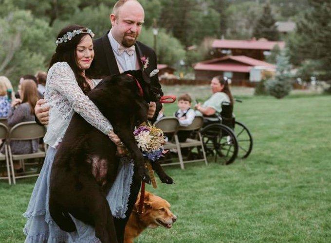 Un chien refuse de mourrir avant le mariage de sa maîtresse