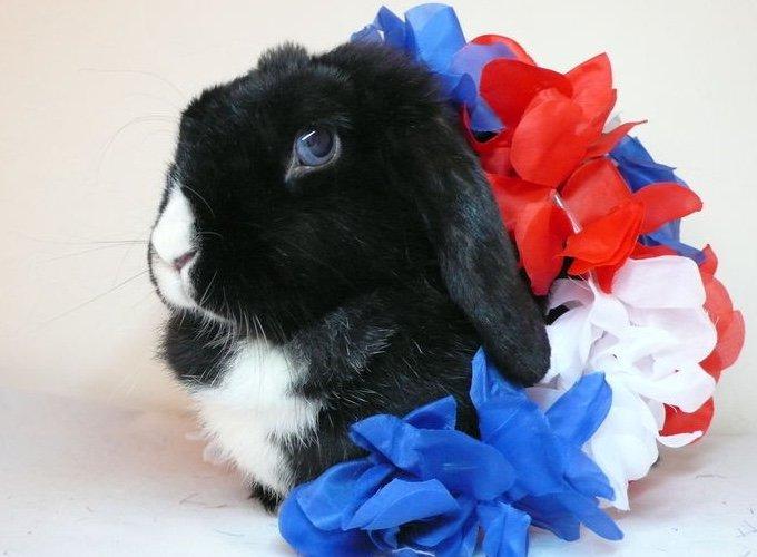 Journée internationale du lapin