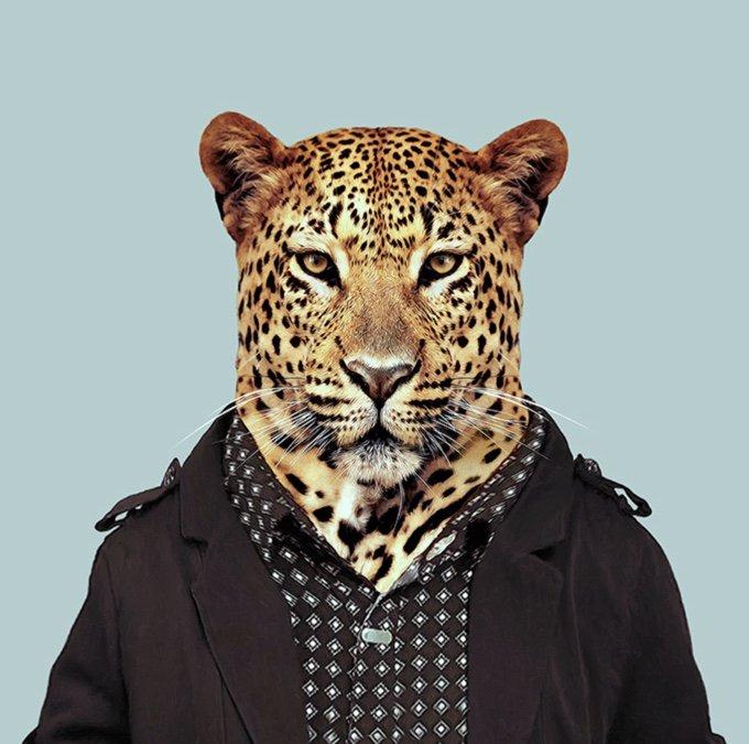 leopard-05-2016