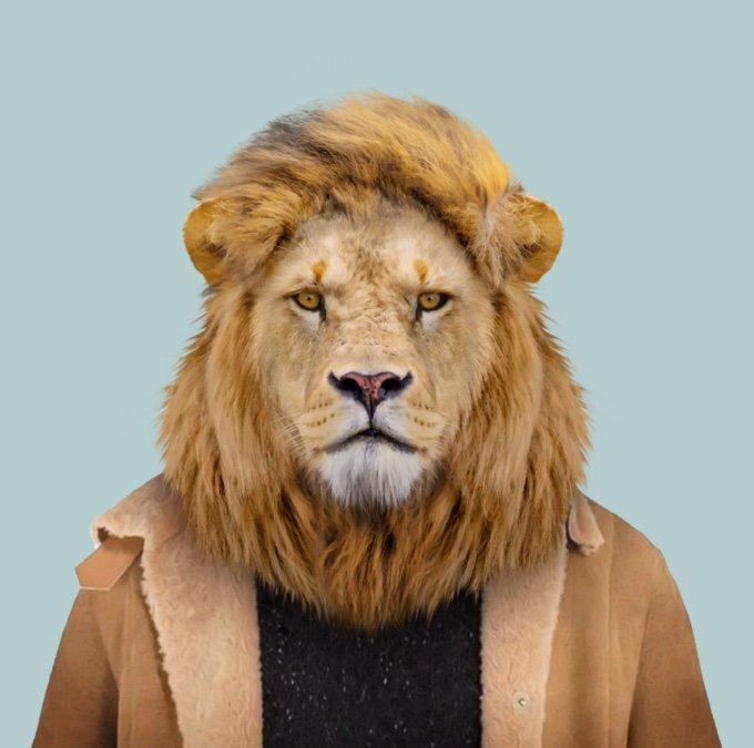 lion-05-2016