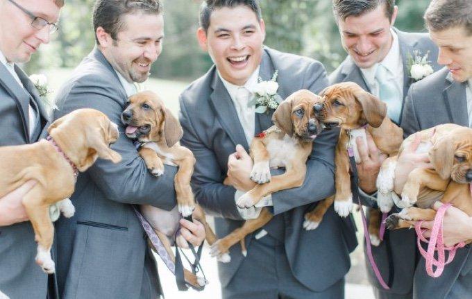 mariage-chiots-05-2016