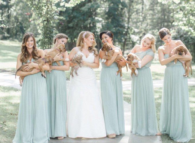 Un couple remplace les bouquets de fleurs de leur mariage par des chiots