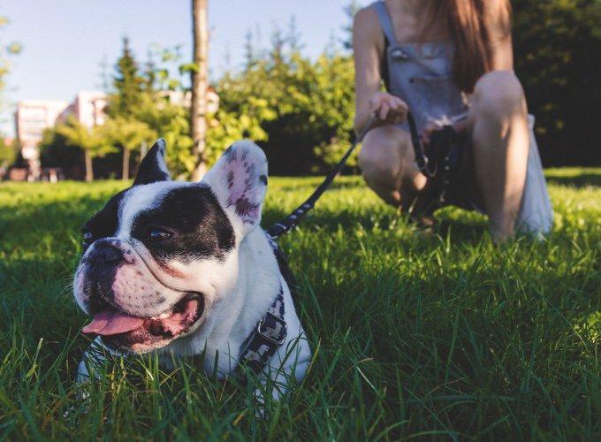 Découvrez The Place To Dog, où sortir avec son chien