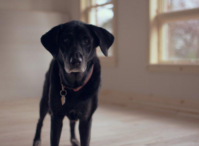 Une société s'occupe de la garde de votre chien après votre mort