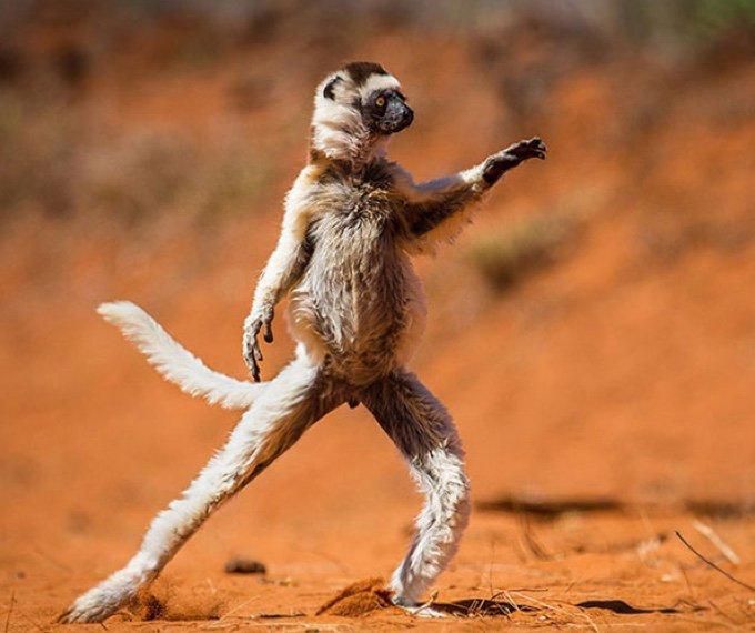 animales haciendo yoga