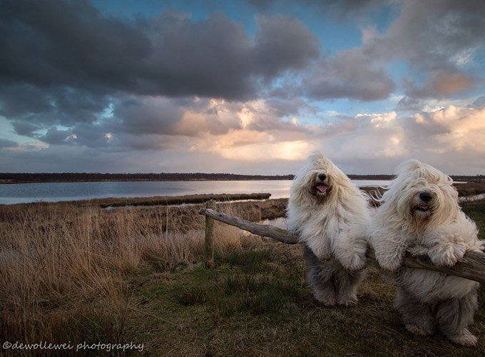 bobtail photographe