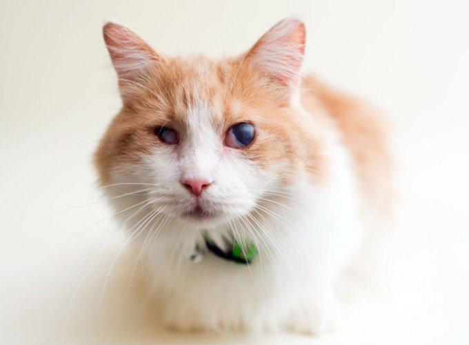 chat aveugle