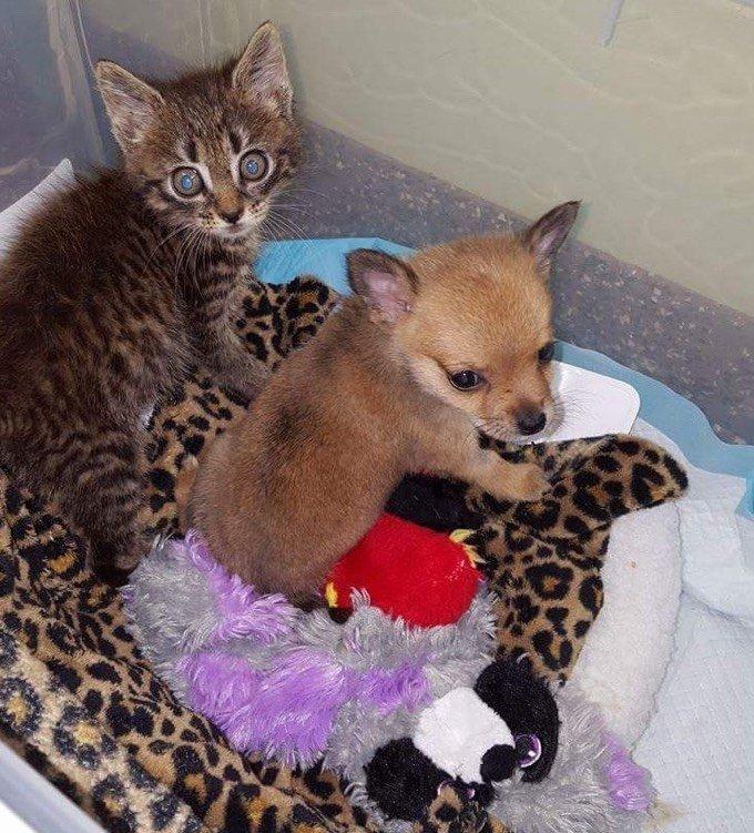 amitié entre chaton et chiot