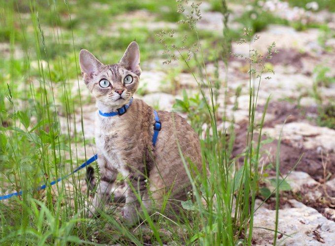 gato con correa