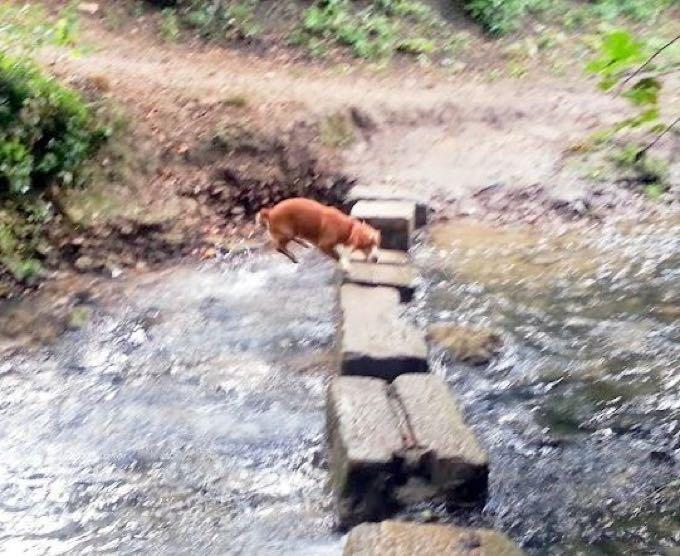 chien rivière