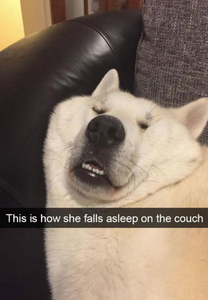 DogSnap13