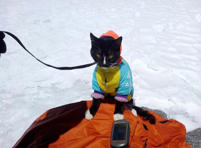 Chat alpiniste