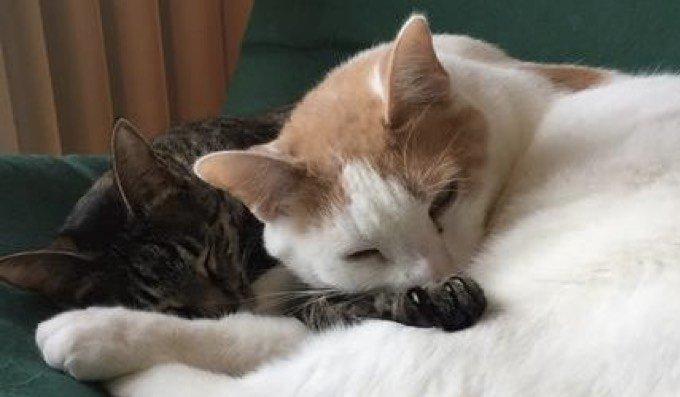 gatito salvado por Christine