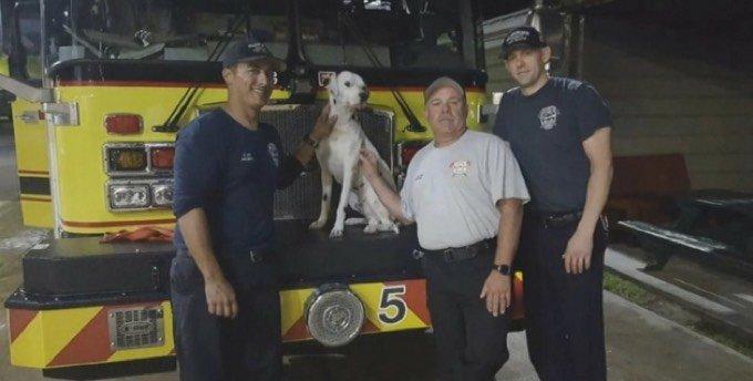chien pompier