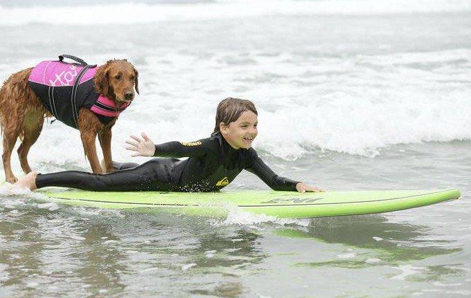 chien thérapeute surf